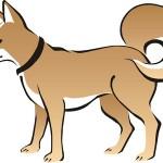 Shio Anjing
