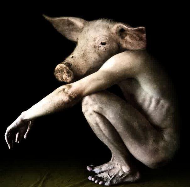 seluk beluk pesugihan babi ngepet