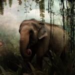 Seputar Minyak Mani Gajah
