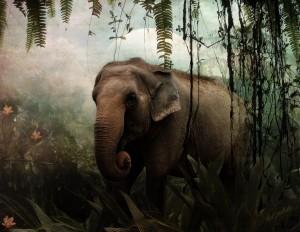 minyak mani gajah tunggal