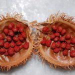 Pewarna Alami Batik, Terbuat Dari Apa?