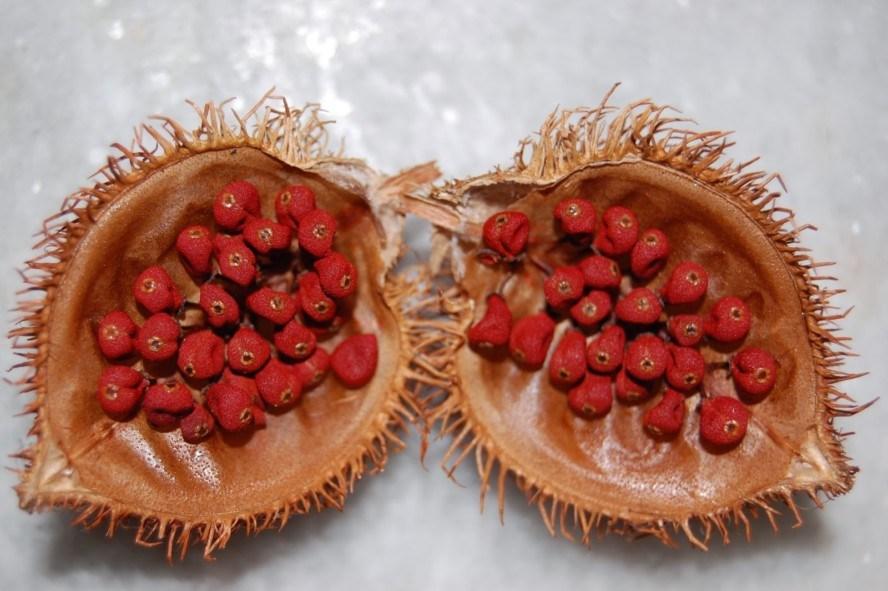 Biji Kesumba - Pewarna Alami Batik