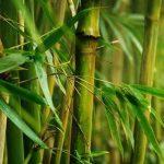 Filosofi Bambu – Belajar Dari Ngelmu Pring