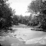 Misteri Buaya Putih Sungai Brantas